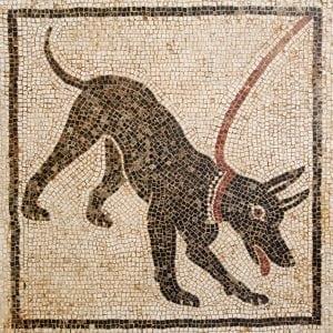 PHbewareofdog