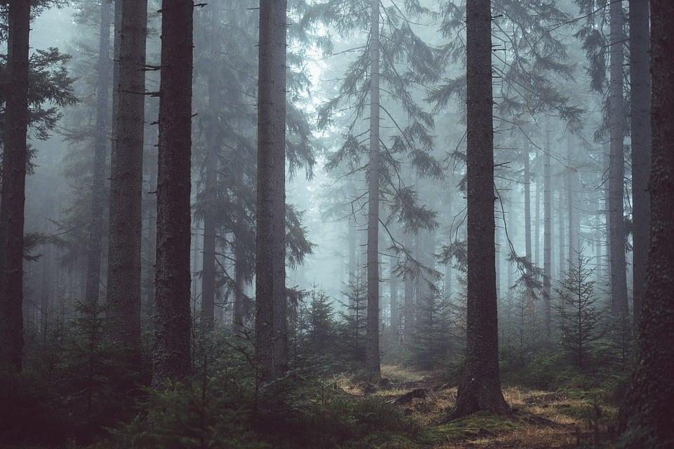 phhowtogetoutoftheforest